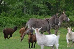 Vacances à la découverte de la ferme @ Ferme pédagogique La Petite Bray'tagne | Blacourt | Hauts-de-France | France